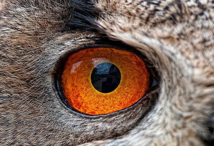 Closeup Of Animal Eyes Xcitefun Net