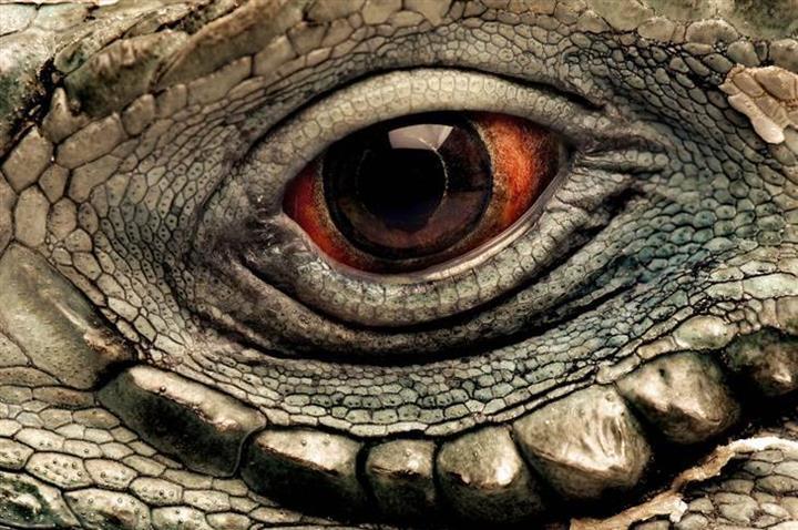 Closeup of Animal Eyes - XciteFun.netAnimal Eye Close Up Picture
