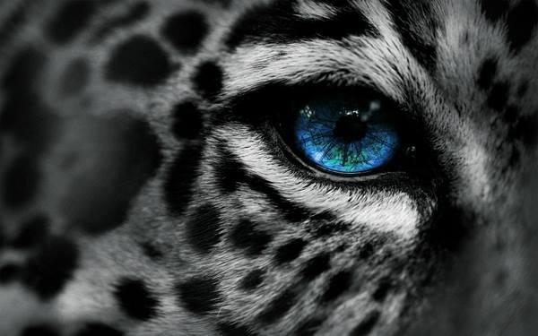 Digital Leopard Art Wallpapers: Closeup Of Animal Eyes