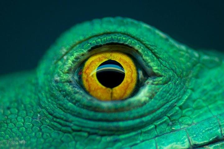 closeup of animal eyes xcitefunnet
