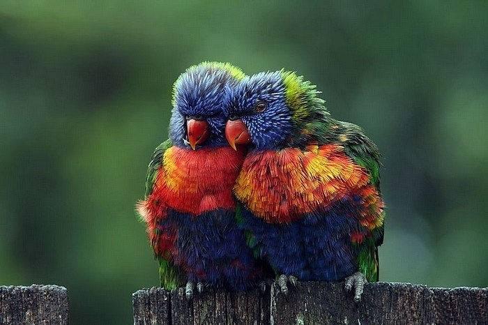 Romantic Birds Couple - XciteFun.net