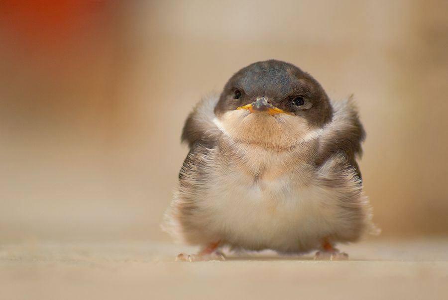 Cute Baby Birds - XciteFun.net