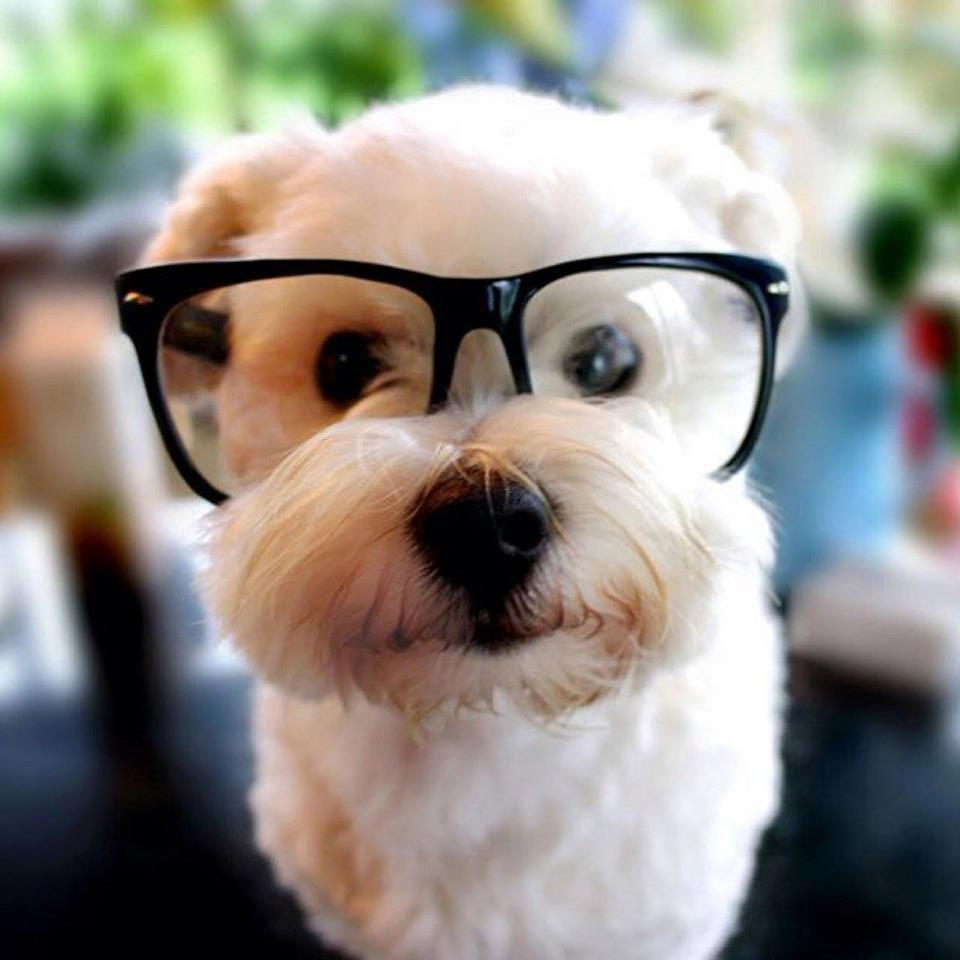 Animals Wearing Glasses Looking Super Cute