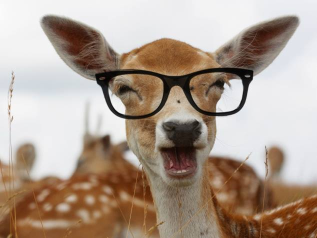 Pictures Of Funny Animals Funny Pictures Of Animals Wearing Glasses,Hacks Space Saving Ideas For Small Apartments