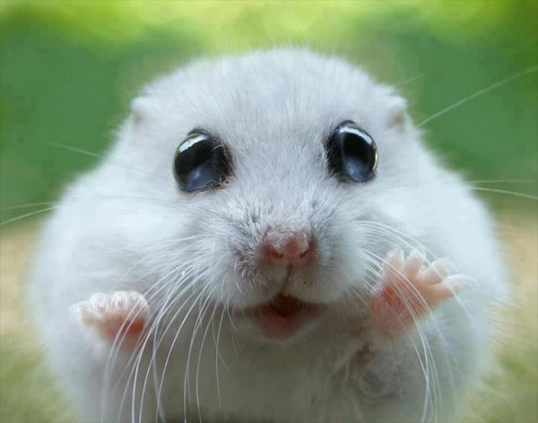 Cute animal postures - Animal mignon ...