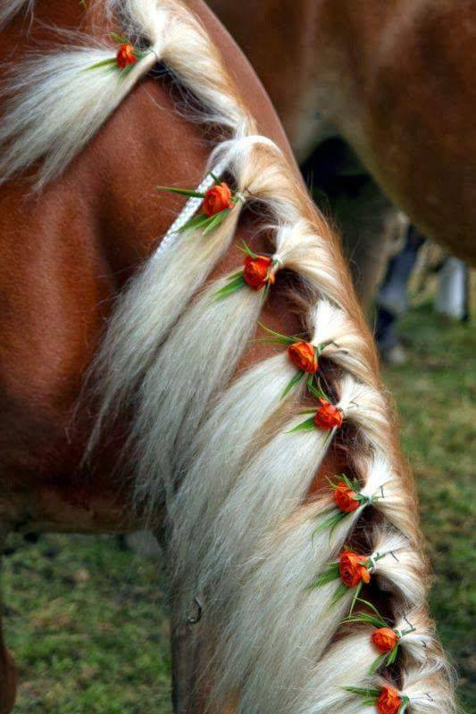Cool Hairstyles For Horses Xcitefun Net