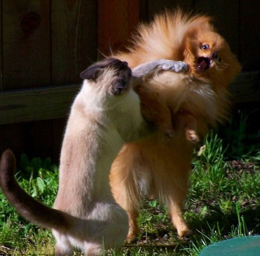 Funny Moments Of Animal Life