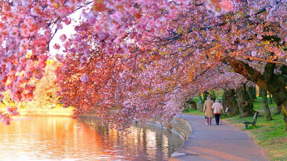 Refreshing Colors of Spring Nature - XciteFun.net