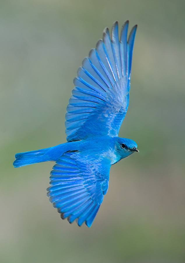 Twitter Cute Bluebird From Mountains