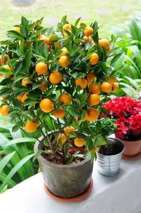 Bonsai - Page 3 379857,xcitefun-bonsai-fruit-tree-6
