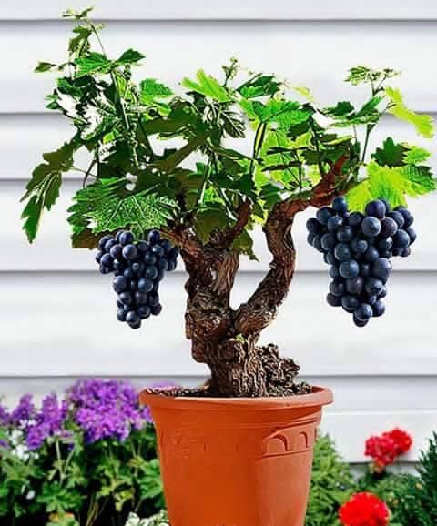 Bonsai - Page 3 379861,xcitefun-bonsai-fruit-tree-2