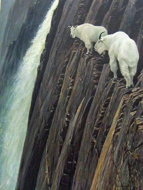 Amazing Rock Climbing Skills Of Goats Xcitefun Net