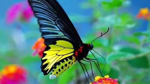 Beautiful Butterflies with Flowers