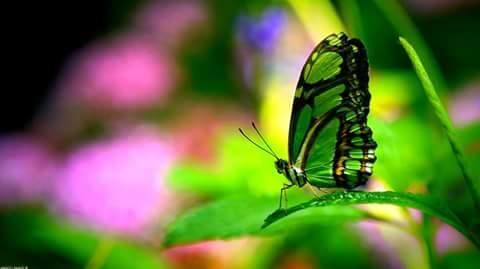 Beautiful Butterflies with Flowers