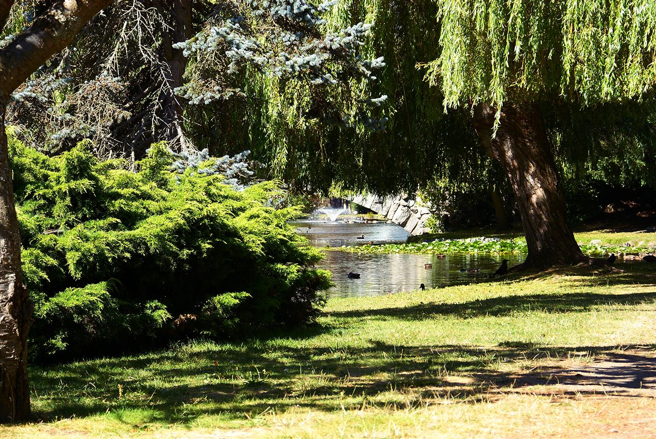Travel Guide To Beacon Hill Park British Columbia