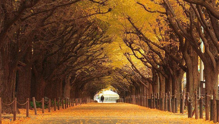 Roads and Pathways Adorned with Nature