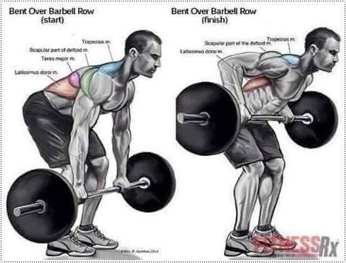 workout illustration for men  xcitefun